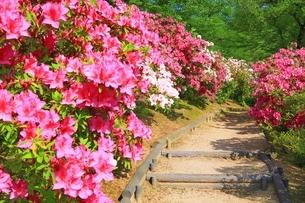 ツツジ咲く西山公園の写真素材 [FYI01818516]
