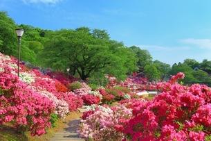 ツツジ咲く西山公園の写真素材 [FYI01818543]
