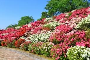 ツツジ咲く西山公園の写真素材 [FYI01818557]