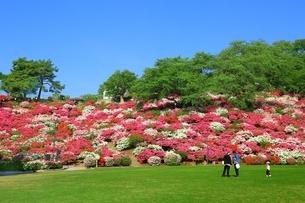 ツツジ咲く西山公園の写真素材 [FYI01818614]