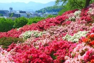 ツツジ咲く西山公園の写真素材 [FYI01818629]