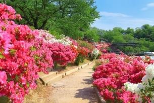 ツツジ咲く西山公園の写真素材 [FYI01818664]