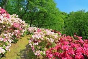 ツツジ咲く西山公園の写真素材 [FYI01818667]