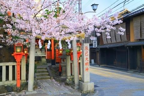 祇園白川 辰巳大明神と桜の写真素材 [FYI01818684]