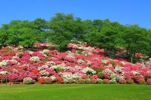 ツツジ咲く西山公園の写真素材 [FYI01818692]