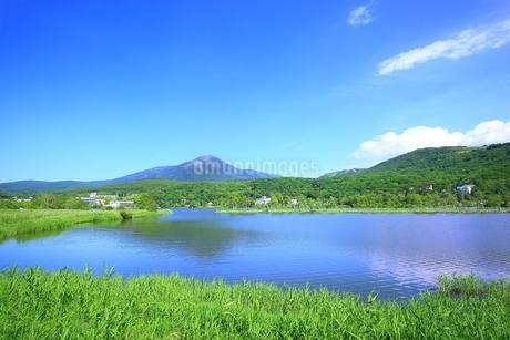 白樺高原 白樺湖と蓼科山の写真素材 [FYI01818701]