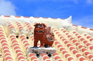 竹富島 シーサーの写真素材 [FYI01818761]