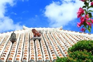 竹富島 シーサーの写真素材 [FYI01818790]