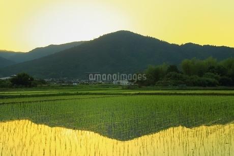 朝焼けの三輪山の写真素材 [FYI01818840]