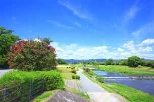 賀茂川とサルスベリの写真素材 [FYI01818850]