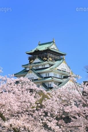 大阪城天守閣と桜の写真素材 [FYI01818901]
