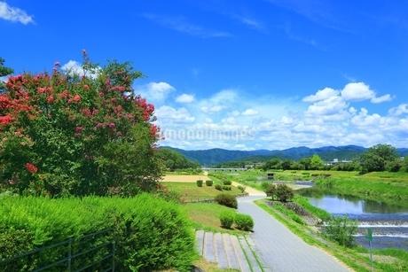 賀茂川とサルスベリの写真素材 [FYI01818903]
