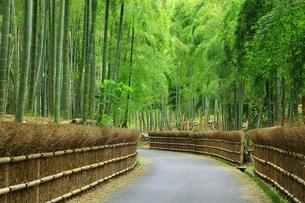 京都洛西 竹の径の写真素材 [FYI01818908]
