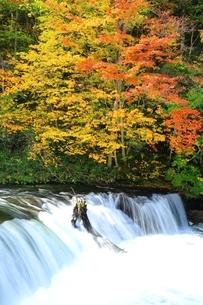 さくらの滝と紅葉の写真素材 [FYI01818917]