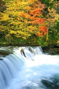 さくらの滝と紅葉の写真素材 [FYI01818949]