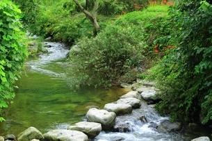 飛鳥川万葉の飛び石の写真素材 [FYI01818968]