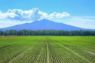小清水町の田園風景と斜里岳の写真素材 [FYI01818999]