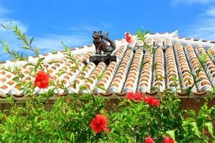 竹富島 シーサーとハイビスカスの写真素材 [FYI01819001]