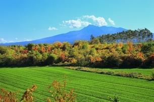 清里町の紅葉と斜里岳の写真素材 [FYI01819071]
