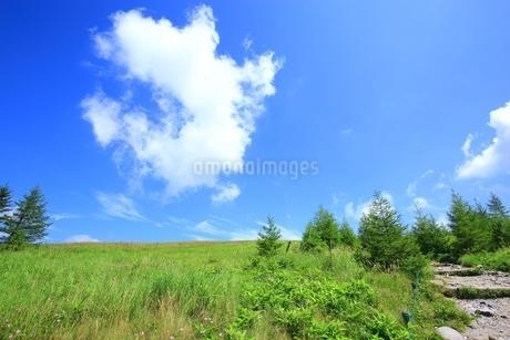 夏の美ヶ原高原の写真素材 [FYI01819080]