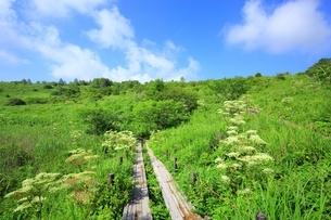 霧ケ峰高原 八島ヶ原湿原の写真素材 [FYI01819103]