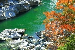 紅葉の小歩危峡の写真素材 [FYI01819165]