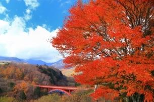 清里高原 紅葉の東沢大橋と八ケ岳の写真素材 [FYI01819184]