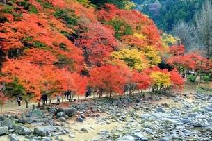 紅葉の香嵐渓の写真素材 [FYI01819195]