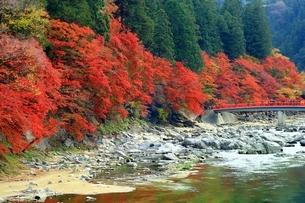 紅葉の香嵐渓の写真素材 [FYI01819212]