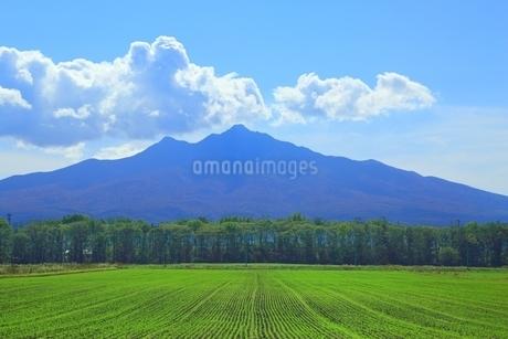 小清水町の田園風景と斜里岳の写真素材 [FYI01819227]
