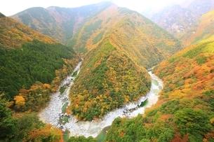 秋の祖谷峡 ひの字渓谷の写真素材 [FYI01819240]