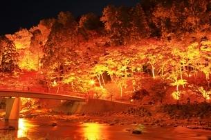 紅葉の香嵐渓ライトアップの写真素材 [FYI01819266]
