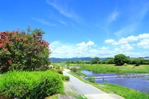 賀茂川とサルスベリの写真素材 [FYI01819273]