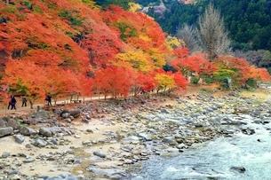 紅葉の香嵐渓の写真素材 [FYI01819287]