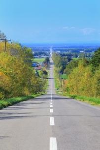 秋の天に続く道の写真素材 [FYI01819322]