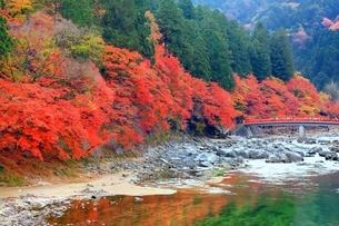 紅葉の香嵐渓の写真素材 [FYI01819323]