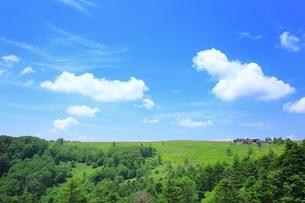 夏の美ヶ原高原の写真素材 [FYI01819345]
