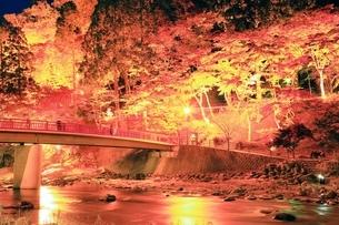 紅葉の香嵐渓ライトアップの写真素材 [FYI01819351]