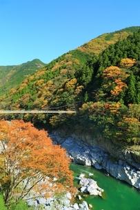 紅葉の小歩危峡の写真素材 [FYI01819370]