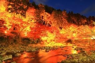 紅葉の香嵐渓ライトアップの写真素材 [FYI01819372]