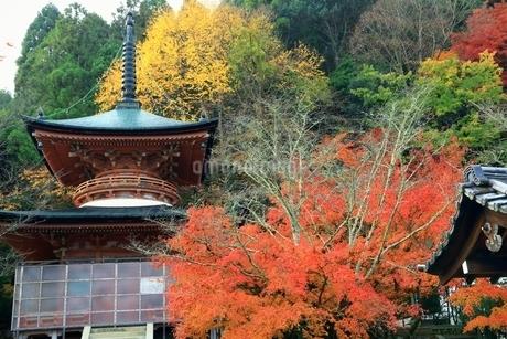 紅葉の嵐山 法輪寺の写真素材 [FYI01819375]