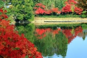 嵯峨野 紅葉の小倉池の写真素材 [FYI01819394]