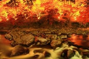 紅葉の香嵐渓ライトアップの写真素材 [FYI01819410]