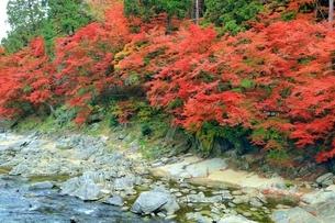 紅葉の香嵐渓の写真素材 [FYI01819441]