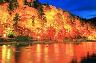 紅葉の香嵐渓ライトアップの写真素材 [FYI01819444]