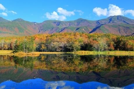秋の知床五湖 二湖と知床連山の写真素材 [FYI01819448]