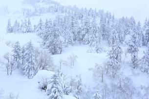 十勝岳温泉から望む樹氷林の写真素材 [FYI01819489]
