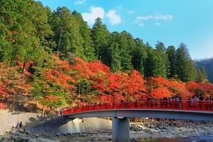紅葉の香嵐渓の写真素材 [FYI01819494]