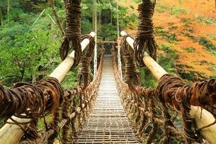 祖谷のかずら橋と紅葉の写真素材 [FYI01819496]