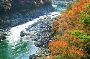 紅葉の小歩危峡の写真素材 [FYI01819525]